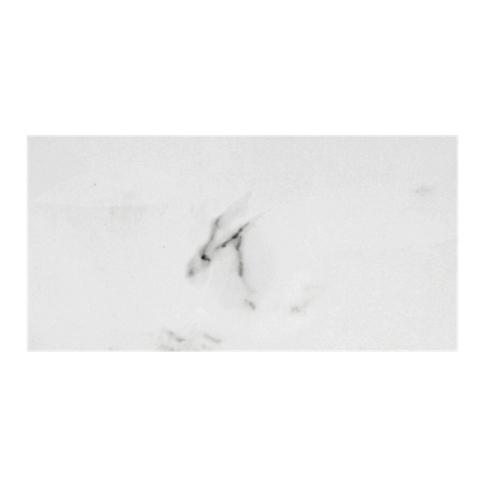 Calacutta Bianco Matte Ceramic Wall Tile 8 X 20 In The